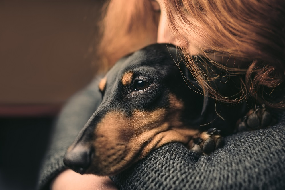 Meningitis and Your Pet
