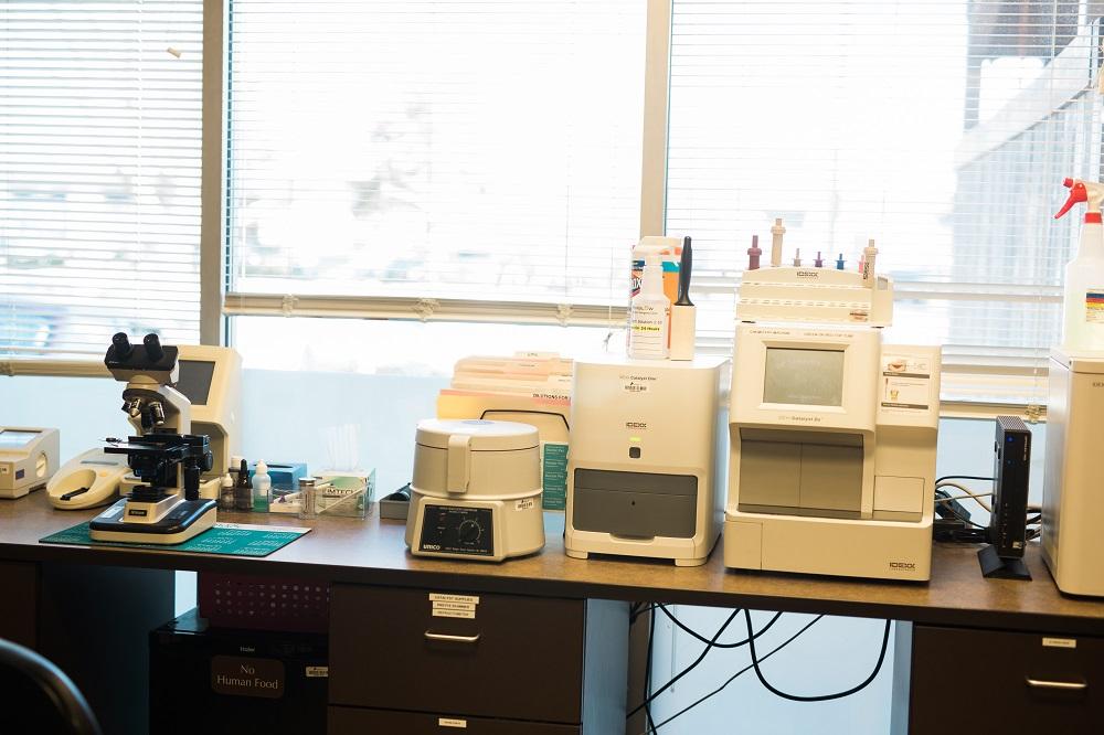 Veterinary Medical Diagnostics: The Critical Piece to Diagnosing Complex Cases