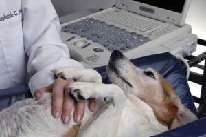 AMVS Veterinary Critical Care