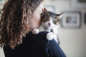 Veterinary Minimally Invasive Procedures