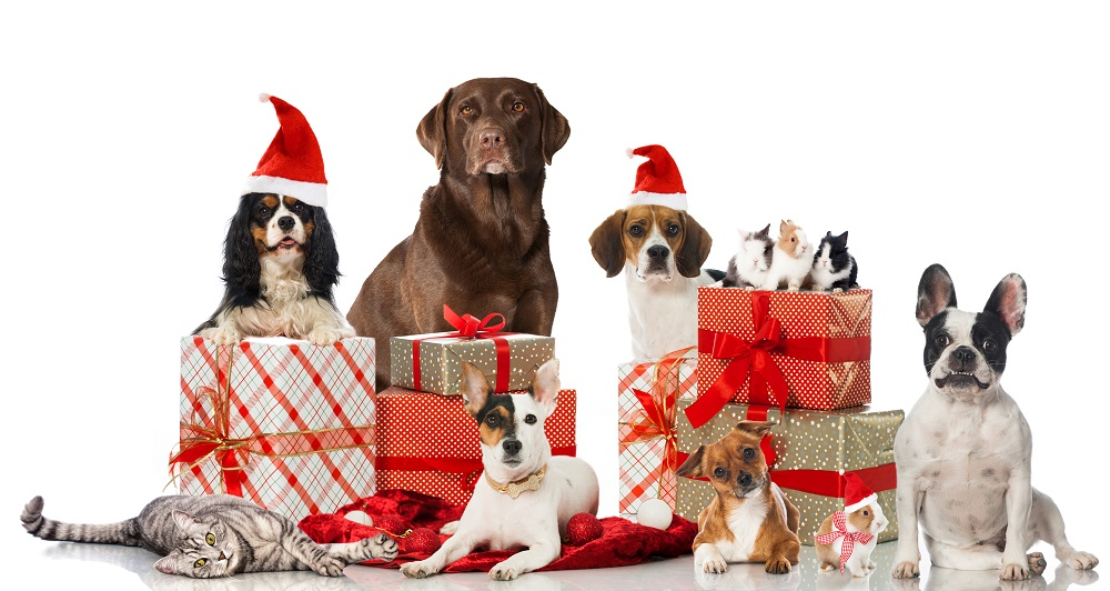 10 Tips for a Pet-Safe Holiday