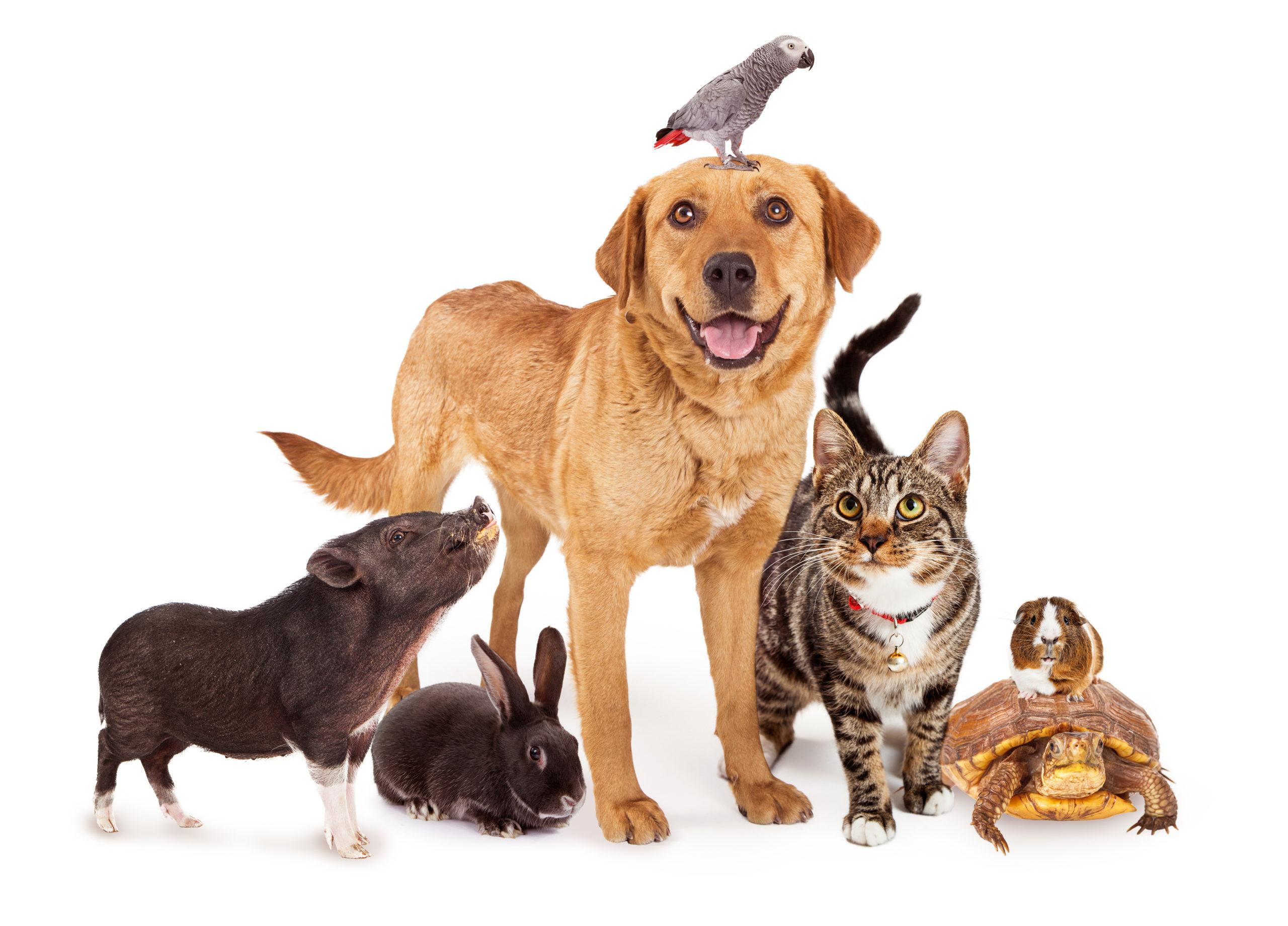 Clinical Trials in Veterinary Medicine