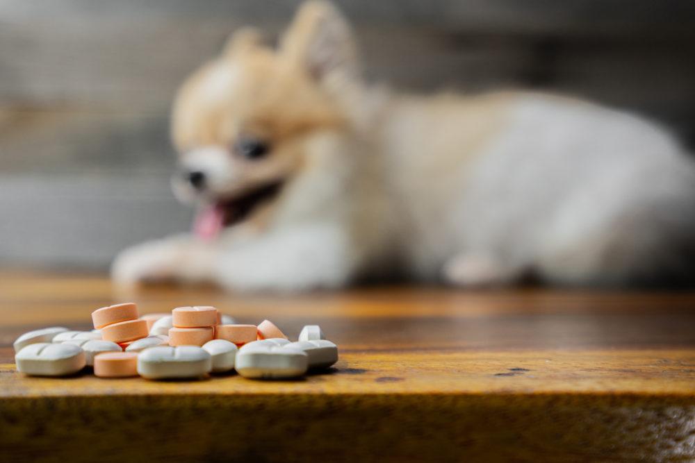 dog next to medicine